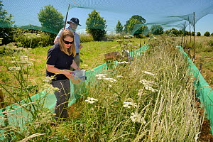 Emily Howard-Williams placing a grain feeding station equipped with an automatic Radio Frequency Identification (RFID) monitor to survey Harvest mice (Micromys minutus) in field enclosure after releas...  -  Nick Upton