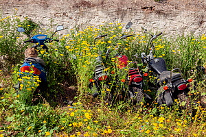 Domestic cat sitting on disused motorbikes, surrounded by flowers , Greece. April 2009. - Constantinos Petrinos