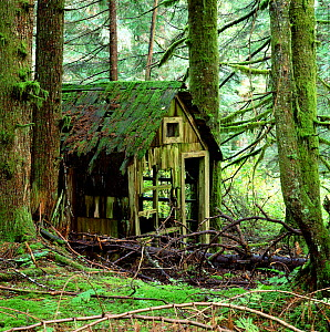 Rotting wooden shed covered in moss, Washington State, USA.  -  Mark Taylor