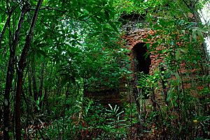 Old Hindu Temple 'Shekertak' overgrown by vegetation in Sundarbans Mangrove Forest, Bangladesh. September 2006. - Dr. Gertrud Neumann-Denzau