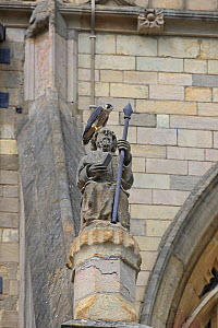 Peregrine (Falco peregrinus) perched on statue at Norwich Cathedral, Norfolk, England, UK, June. - Robin Chittenden