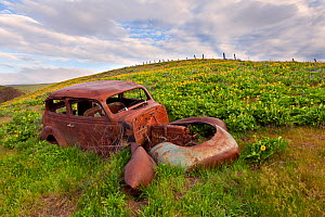 Rusty old car in Columbia Hills State Park, Columbia River Gorge National Scenic Area, Washington, USA, April - Kirkendall-Spring