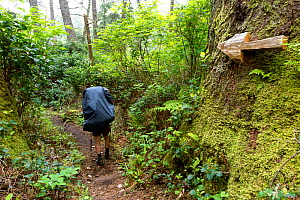 Arrow trail marker along the Klanawa River, West Coast Trail, Pacific Rim National Park Reserve, Vancouver Island, British Columbia, Canada, May 2015. Model released.  -  Kirkendall-Spring