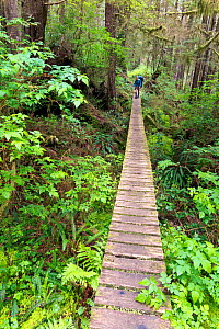 Long section of boardwalk, West Coast Trail, Nitinat Narrows, Pacific Rim National Park, Vancouver Island, British Columbia, Canada, May 2015. - Kirkendall-Spring
