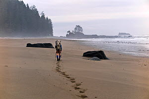 Vicky Spring hiking a beach along the West Coast Trail north Carmanah Point,  Pacific Rim National Park Reserve, Vancouver Island, British Columbia, Canada, May 2015. Model released.  -  Kirkendall-Spring
