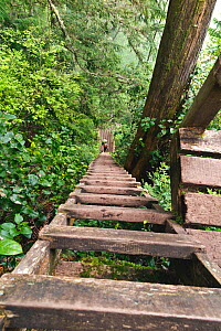 Vicky Spring descending ladders to Logan Creek, along the West Coast Trail, Pacific Rim National Park Reserve, Vancouver Island, British Columbia, Canada, May 2015. Model released. - Kirkendall-Spring