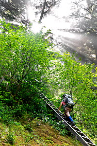 Vicky Spring ascending a ladder near Cullite Creek, West Coast Trail,  Pacific Rim National Park Reserve,Vanvouver Island, British Columbia, Canada, May 2015. - Kirkendall-Spring