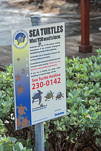 Information sign about Hawksbill sea turtle (Eretmochelys imbricata) nesting and conservation, near nesting beach in Barbados. June 2015.  -  Adrian Davies