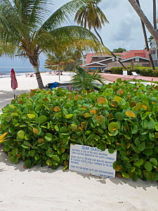 Sign asking guests of hotel to keep beach clean as the beach is used for Hawksbill sea turtle (Eretmochelys imbricata) nesting, Barbados. June 2015.  -  Adrian Davies