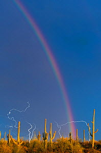 Lightning storm with rainbow over Saguaro cactus (Carnegiea gigantea) Avra Valley, Saguaro National Park, Tucson Mountains, Arizona, USA, August 2015. Long exposure with lightning trigger. - Jack Dykinga