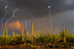 Lightning storm with rainbow over Saguaro cactus (Carnegiea gigantea) near Redrock, Arizona State Trust, Sonoran Desert, Arizona. September 2015. Long exposure with lightning trigger.  -  Jack Dykinga