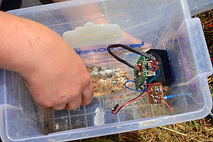 Plastic bottle containing grain fitted into a feeding station equipped with an automatic Radio Frequency Identification (RFID) monitor for surveying Harvest mice (Micromys minutus) after release into...  -  Nick Upton