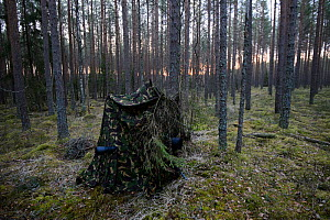 Photography hide in pine forest for photographing Capercaillie, Valgamaa, Estonia, April. - Sven  Zacek