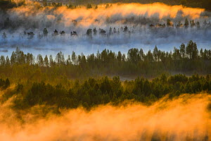 Aerial view at  sunrise of fog over  bog forest,  Tartumaa, Estonia, May 2013.  -  Sven  Zacek