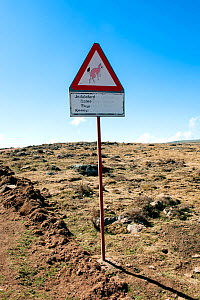 Ethiopian wolf (Canis simensis) road sign, Sanetti Plateau, Bale Mountains National Park, Oromia Region, Southeast Ethiopia, Africa, March. - Constantinos Petrinos
