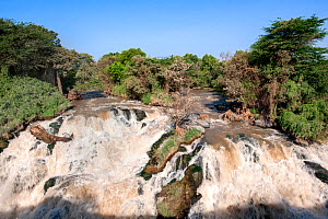 Awash river waterfall, Awash National Park. Afar Region, Great Rift Valley, Ethiopia, Africa, March 2009.  -  Constantinos Petrinos