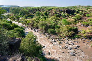 Awash river, Awash National Park, Afar Region, Great Rift Valley, Ethiopia, Africa, March 2009.  -  Constantinos Petrinos