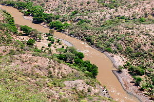 Awash river and gorge, Awash National Park, Afar Region, Great Rift Valley, Ethiopia, Africa, March 2009.  -  Constantinos Petrinos