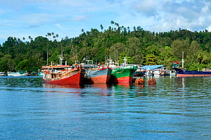 Three Indonesian fishing boats anchored side by side, close to the city of Bitung, Lembeh Strait, Molucca Sea Sulawesi, Indonesia, Indo-Pacific, March 2013 - Constantinos Petrinos