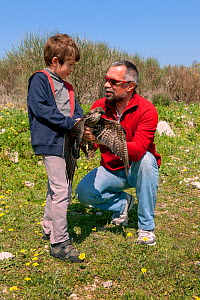 Founder and director of the Aegean Wildlife Hospital, Mr. Marios Fournaris, assisting a young volunteer at the hospital grounds to release an Eleonora's Falcon (Falco eleonorae) back into the wild.  T... - Constantinos Petrinos