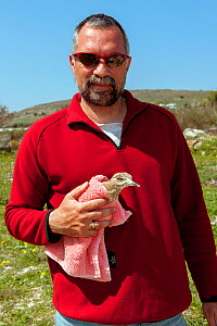 Founder and director of the Aegean Wildlife Hospital, Mr. Marios Fournari holding blind Eurasian stone curlew  (Burhinus oedicnemus). The bird was shot illegally, is blind and unable to feed. The Aege...  -  Constantinos Petrinos