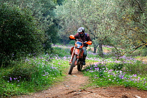Recreational motocross rider on path with Anemones, (Anemone coronaria and Anemone pavonina)  Mount Hymettus,  Kessariani Aesthetic Forest, East-Central Attica, Greece, Mediterranean, March 2015. - Constantinos Petrinos