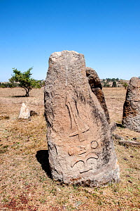 Megaliths with engraved figures (sword), megalithic stelae field, Tiya archaeological site UNESCO World Heritage Site, Soddo Region, Ethiopia. February 2009.  -  Constantinos Petrinos