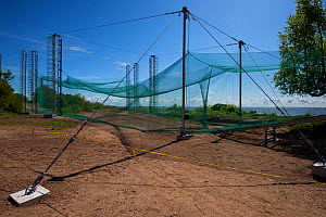 Heligoland bird trap, at the Ventes Ragas bird ringing station, one of the most modern in the world, Nemunas River Delta, Lithuania, May 2015.  -  Staffan Widstrand