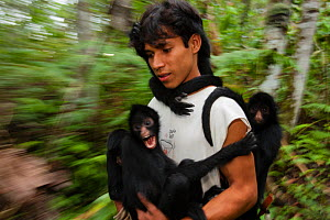 Man with Chamec spider monkeys (Ateles chamek) holding onto him as he walks through sanctuary. Ikamaperou Sanctuary, Amazon, Peru. October 2006.  -  Cyril Ruoso