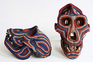 Decorated Western gorilla (Gorilla gorilla) skull, seized at airport customs at Roissy Charles de Gaulle Airport, France, March. - Cyril Ruoso