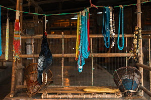 Kalij pheasant (Lophura leucomelanos) and beads for sale in market. Daporijo Town, Arunachal Pradesh, North East India, November 2014.  -  Pete Oxford