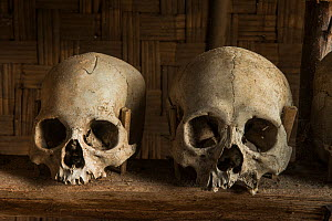 Head-hunted human skulls, collected by the Konyak Naga tribe,  North East India, October 2014. - Pete Oxford
