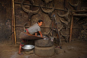 Konyak Naga winnowing rice in house, Mon district. Nagaland,  North East India, October 2014.  -  Pete Oxford