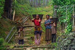 Konyak Naga woman and children carrying rice baskets. Mon district. Nagaland,  North East India, October 2014.  -  Pete Oxford
