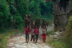 Konyak Naga tribe people carrying firewood, Mon district, Nagaland,  North East India, October 2014.  -  Pete Oxford