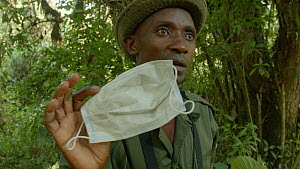 Chief guide speaking to tourists about watching Eastern lowland gorillas (Gorilla beringei graueri), talking about the use of hygiene masks to prevent the spread of diseases, Kahuzi-Biega National Par...  -  Jabruson Motion