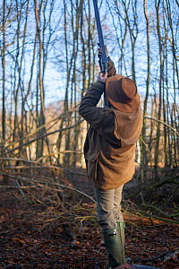 Man taking aim with his gun at a Ring-necked pheasant (Phasianus colchicus) flying overhead during a winter shoot on shooting estate, southern England, UK. January.  -  Neil Aldridge