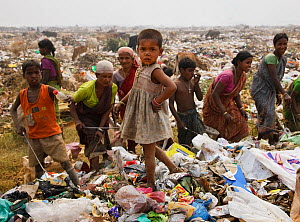 Young Indian rag-picker girl standing on a pile of rubbish in a landfill site, Guwahti, Assam, India, March 2009.  -  Tony Heald