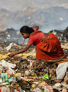 Indian woman in sari picking through rubbish a t a landfill site, Guwahati, Assam, India, March 2009.  -  Tony Heald