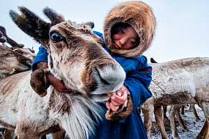 Nenet girl feeding Reindeer (Rangifer tarandus) during summer migration, Yamal Peninsula, Russia. May.  -  Arne Hodalic