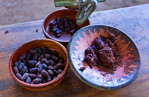 Cocoa (Theobroma cacao) production from cocoa beans. Showing cocoa beans with skin, toasted and  ground cocoa paste, Puerto Jimenez, The Osa Peninsula, Puntarenas Province,  Costa Rica. - Juan  Carlos Munoz
