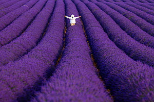 Person standing with their arms outstretched in Lavender (Lavandula angustifolia) fields, Valensole Plateau, Alpes Haute Provence, France, June. - Juan  Carlos Munoz