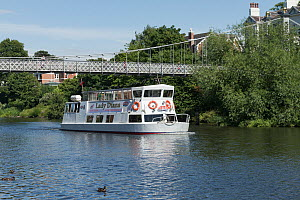 River cruise boat on the River Dee, Chester, Cheshire, UK, July 2014. All non-editorial uses must be cleared individually. - Norma  Brazendale