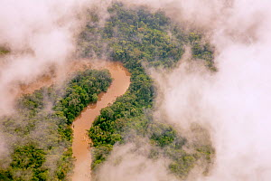 Aerial view of Amazon Rainforest, and the  Manati River, Peru, July 2015.  -  Mark  Bowler