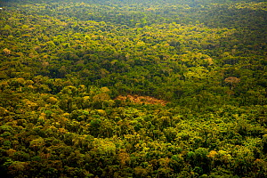 Aerial view of secondary forest, and land cleared for small-scale agriculture in the traditional sustainable 'chacra' system (a type of slash and burn that returns to forest in rotation) Amazon Region... - Mark  Bowler