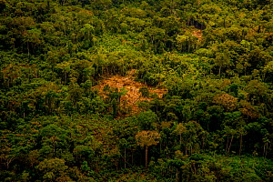 Rainforest aerial showing secondary forest, land cleared for small-scale agriculture in the traditional sustainable 'chacra' system (a type of slash and burn that returns to forest in rotation) Amazon... - Mark  Bowler