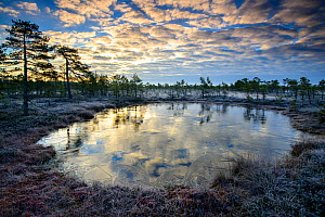 Sunrise over a frozen bog pool, Tartumaa, Estonia, November 2014. - Sven  Zacek