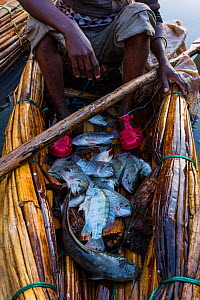 Fisherman returning with his catch to Bahir Dar, Lake Tana Biosphere Reserve, Ethiopia. December 2013.  -  Bruno D'Amicis