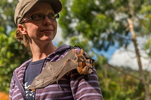 Tolga Bat Hospital volunteer with Little red flying fox (Pteropus scapulatus) crawling over shoulder. Tolga Bat Hospital, Atherton Tablelands, Queensland, Australia. August 2014. Second Place in the M...  -  Jurgen Freund
