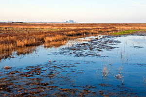 Steart Marshes adjoining the Bristol Channel and the River Parrett Estuary. Now being allowed to flood on high tides to create new saltmarsh habitat. Hinkley Point nuclear power station in background.... - John Waters